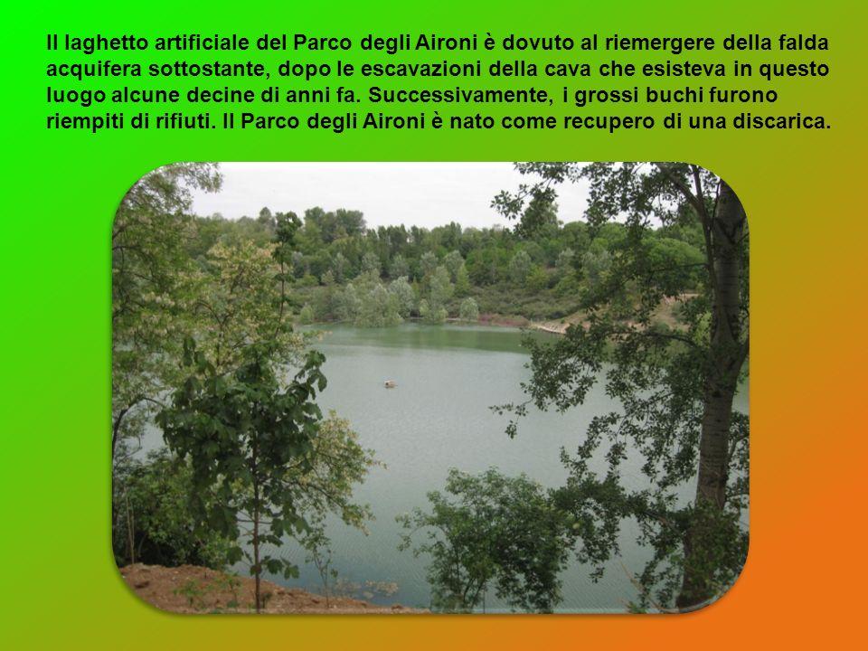 Il laghetto artificiale del Parco degli Aironi è dovuto al riemergere della falda acquifera sottostante, dopo le escavazioni della cava che esisteva i