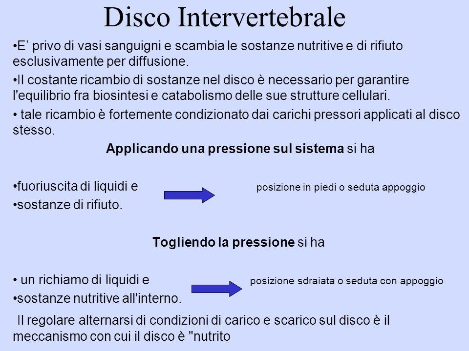 Disco Intervertebrale E privo di vasi sanguigni e scambia le sostanze nutritive e di rifiuto esclusivamente per diffusione.