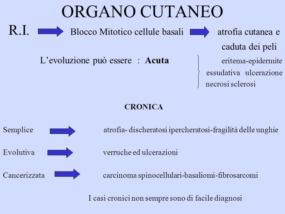 ORGANO CUTANEO R.I.