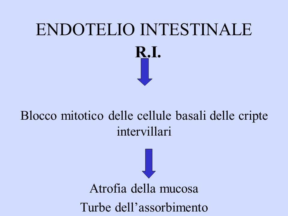 ENDOTELIO INTESTINALE R.I.