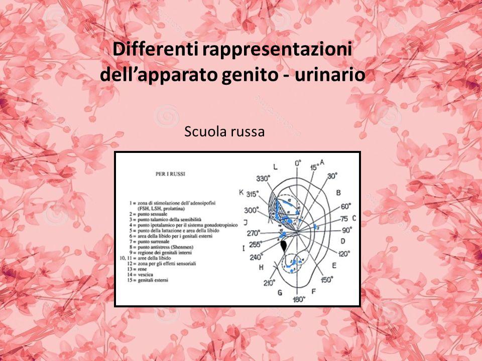Differenti rappresentazioni dellapparato genito - urinario Scuola russa