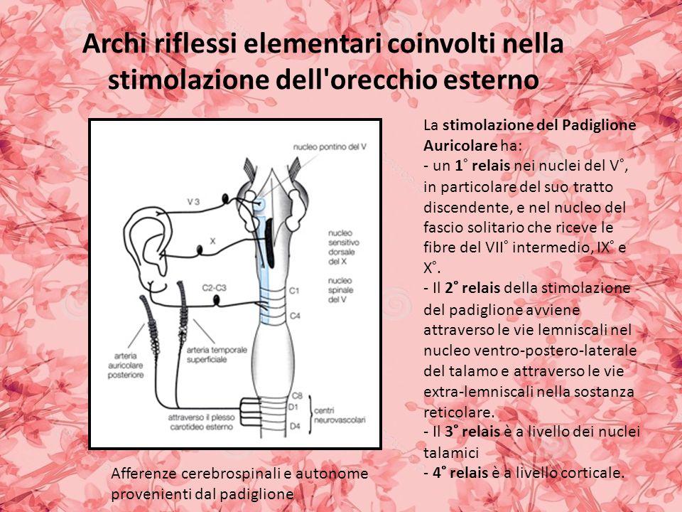 Archi riflessi elementari coinvolti nella stimolazione dell orecchio esterno La stimolazione del Padiglione Auricolare ha: - un 1° relais nei nuclei del V°, in particolare del suo tratto discendente, e nel nucleo del fascio solitario che riceve le fibre del VII° intermedio, IX° e X°.