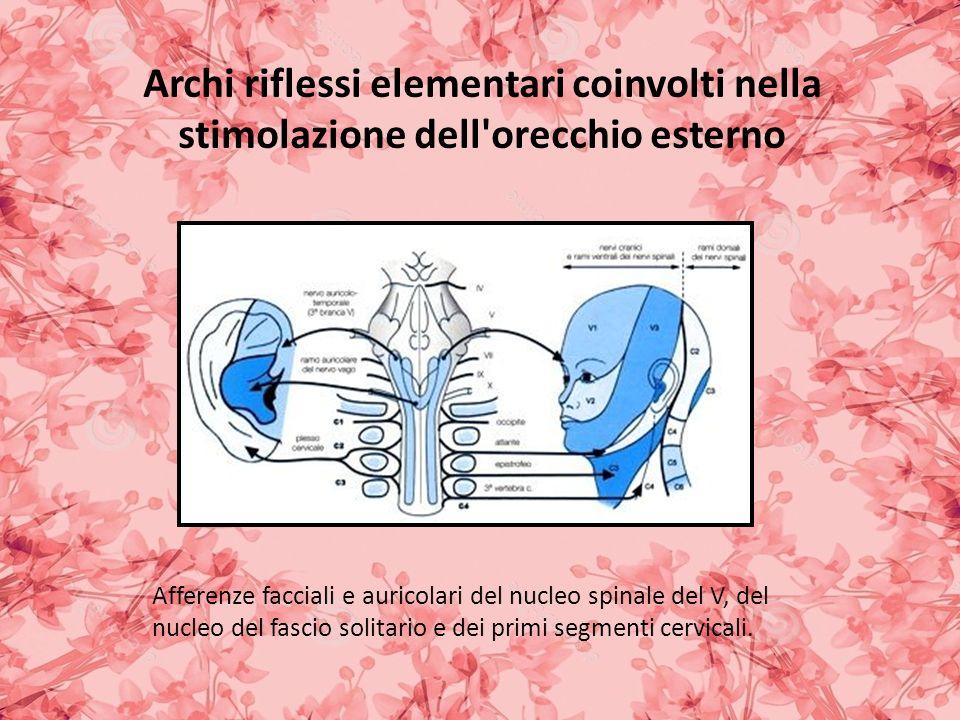 Afferenze facciali e auricolari del nucleo spinale del V, del nucleo del fascio solitario e dei primi segmenti cervicali.