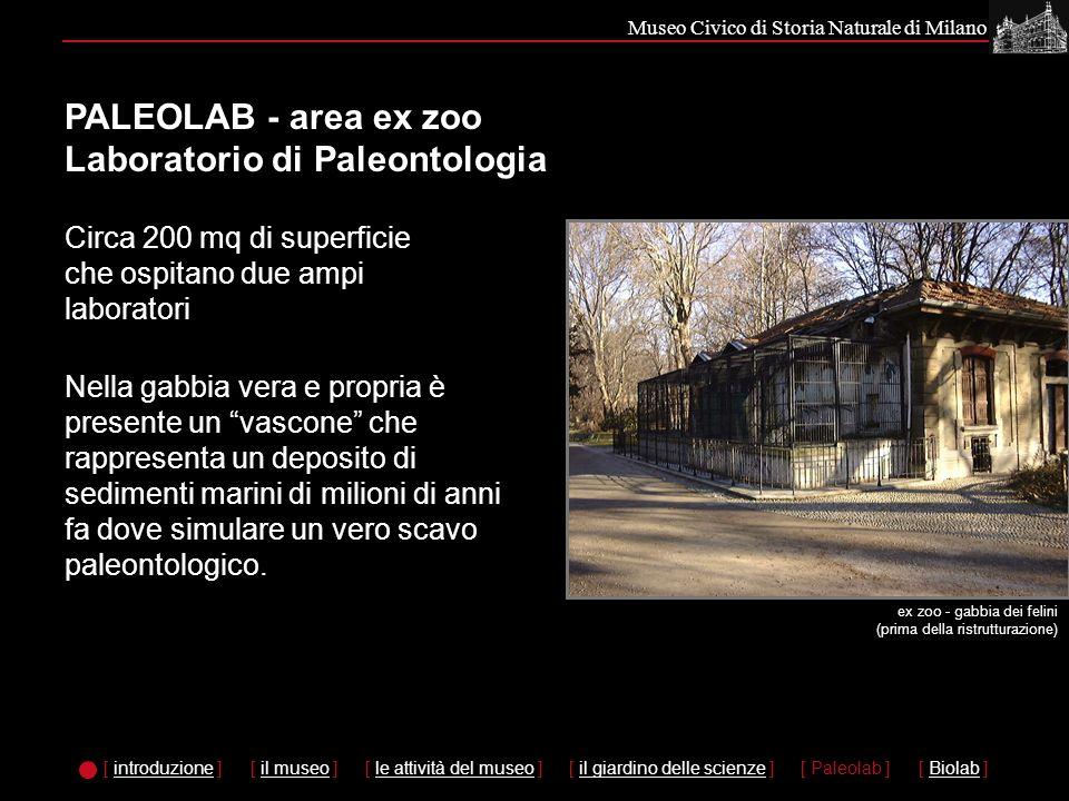 Museo Civico di Storia Naturale di Milano PALEOLAB - area ex zoo Laboratorio di Paleontologia Nella gabbia vera e propria è presente un vascone che rappresenta un deposito di sedimenti marini di milioni di anni fa dove simulare un vero scavo paleontologico.
