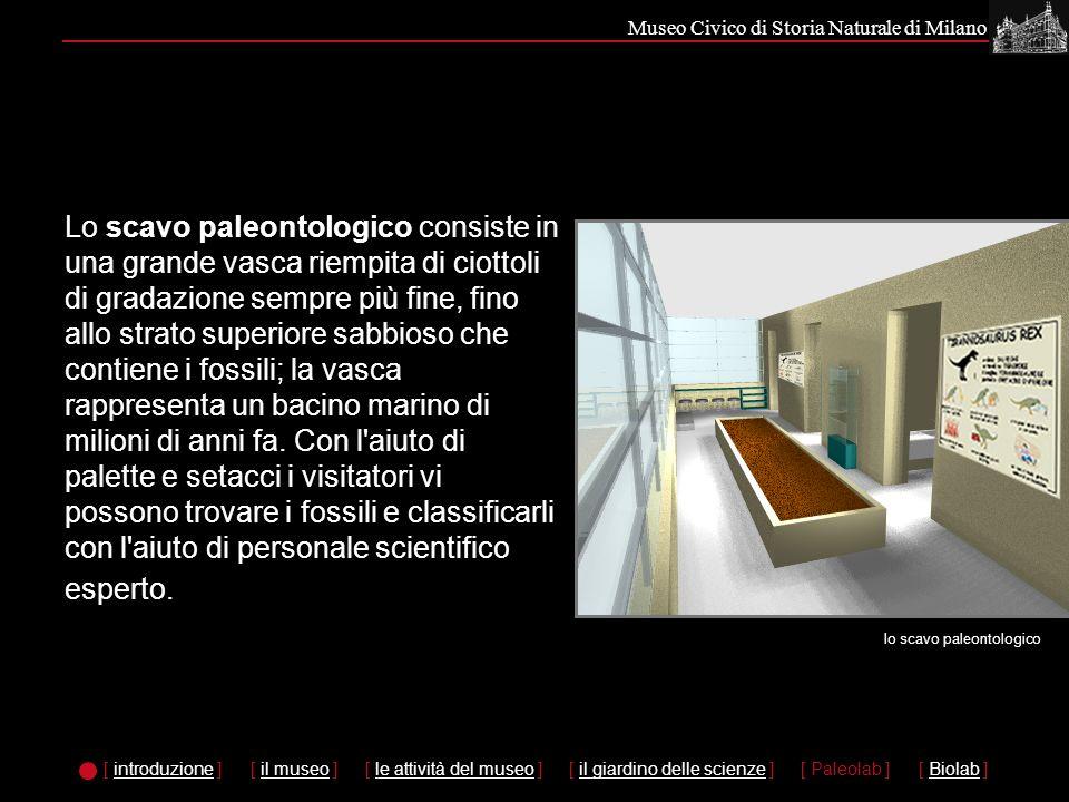 Museo Civico di Storia Naturale di Milano Lo scavo paleontologico consiste in una grande vasca riempita di ciottoli di gradazione sempre più fine, fino allo strato superiore sabbioso che contiene i fossili; la vasca rappresenta un bacino marino di milioni di anni fa.