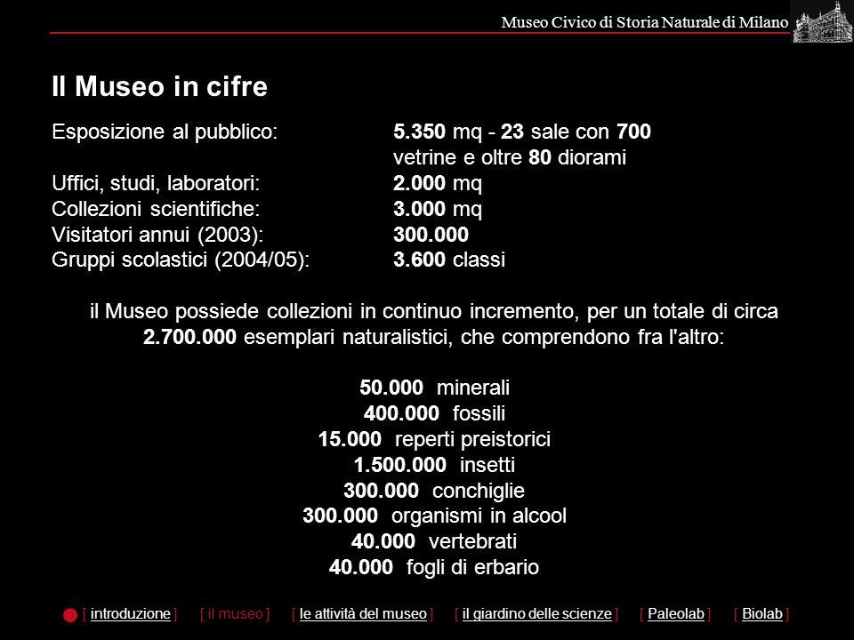Museo Civico di Storia Naturale di Milano Esposizione al pubblico: 5.350 mq - 23 sale con 700 vetrine e oltre 80 diorami Uffici, studi, laboratori: 2.000 mq Collezioni scientifiche: 3.000 mq Visitatori annui (2003): 300.000 Gruppi scolastici (2004/05):3.600 classi il Museo possiede collezioni in continuo incremento, per un totale di circa 2.700.000 esemplari naturalistici, che comprendono fra l altro: 50.000 minerali 400.000 fossili 15.000 reperti preistorici 1.500.000 insetti 300.000 conchiglie 300.000 organismi in alcool 40.000 vertebrati 40.000 fogli di erbario Il Museo in cifre [ introduzione ]introduzione [ il museo ] [ le attività del museo ]le attività del museo [ il giardino delle scienze ]il giardino delle scienze [ Paleolab ]Paleolab [ Biolab ]Biolab