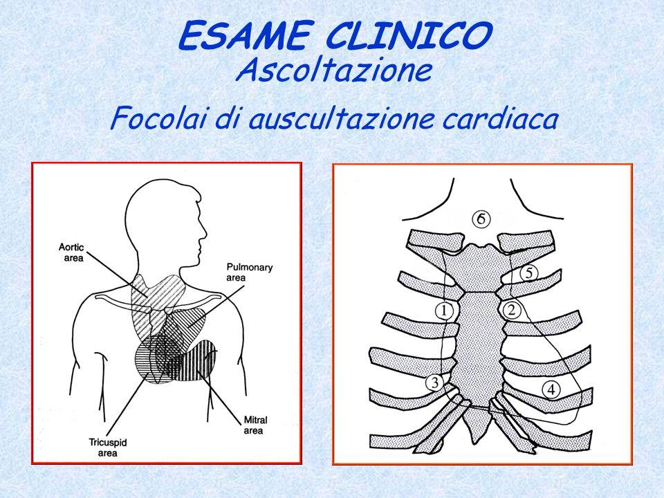 Focolai di auscultazione cardiaca ESAME CLINICO Ascoltazione