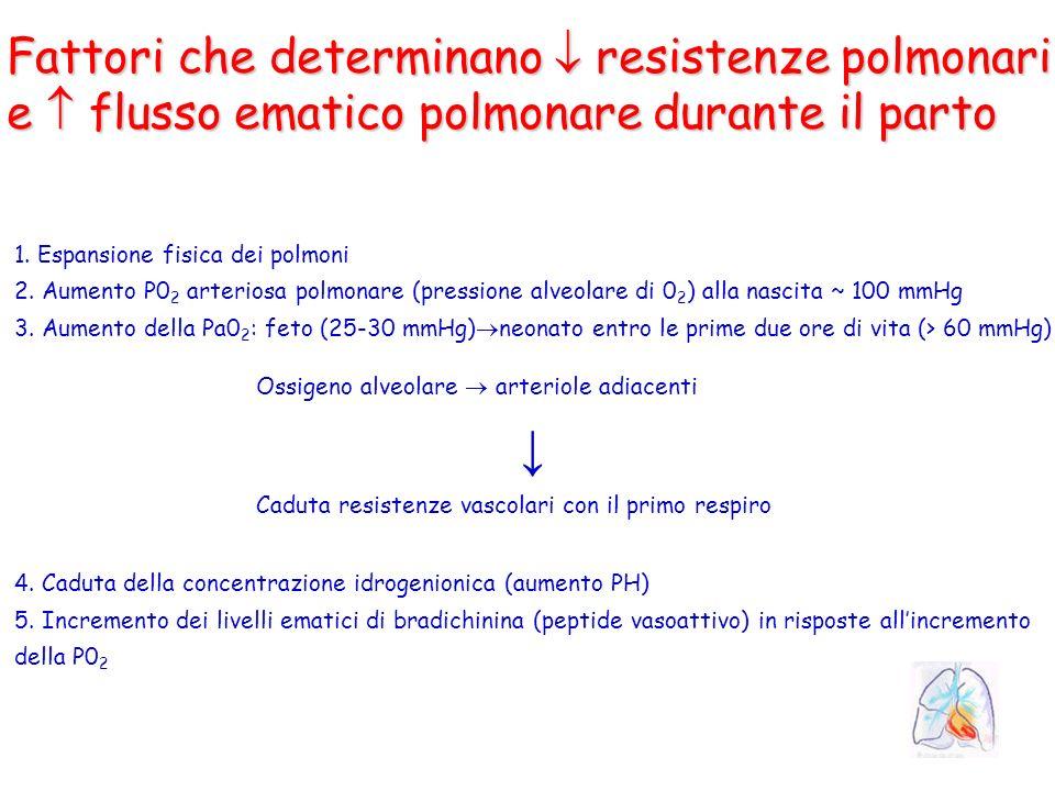 Fattori che determinano resistenze polmonari e flusso ematico polmonare durante il parto 1. Espansione fisica dei polmoni 2. Aumento P0 2 arteriosa po