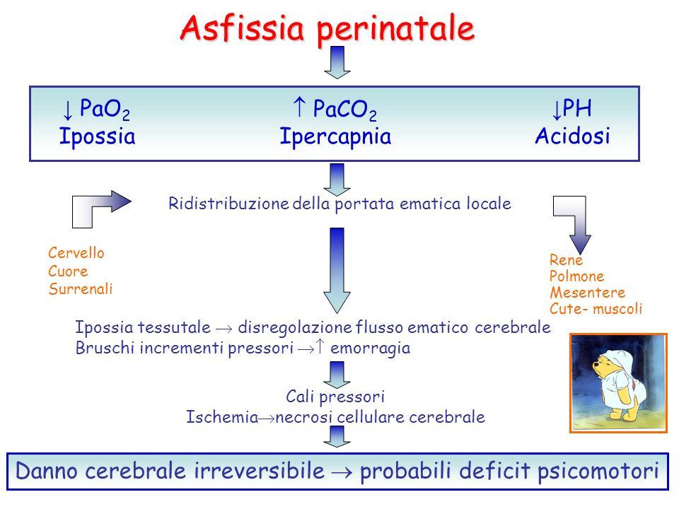 Asfissia perinatale PaO 2 Ipossia Ridistribuzione della portata ematica locale PaCO 2 Ipercapnia PH Acidosi Cervello Cuore Surrenali Rene Polmone Mese