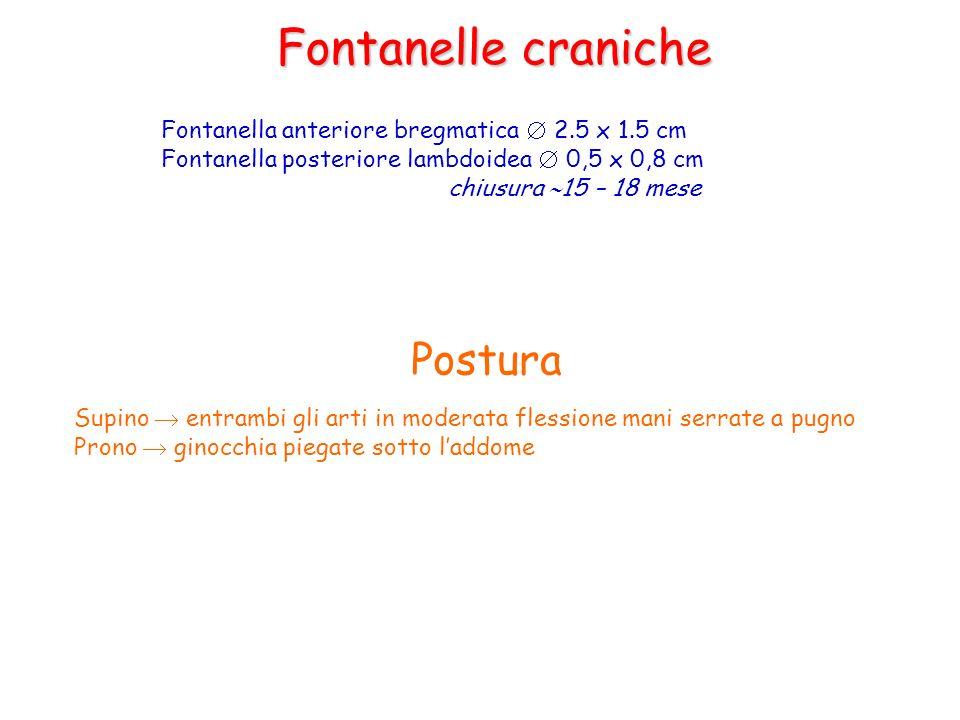 Fontanelle craniche Fontanella anteriore bregmatica 2.5 x 1.5 cm Fontanella posteriore lambdoidea 0,5 x 0,8 cm chiusura 15 – 18 mese Postura Supino en