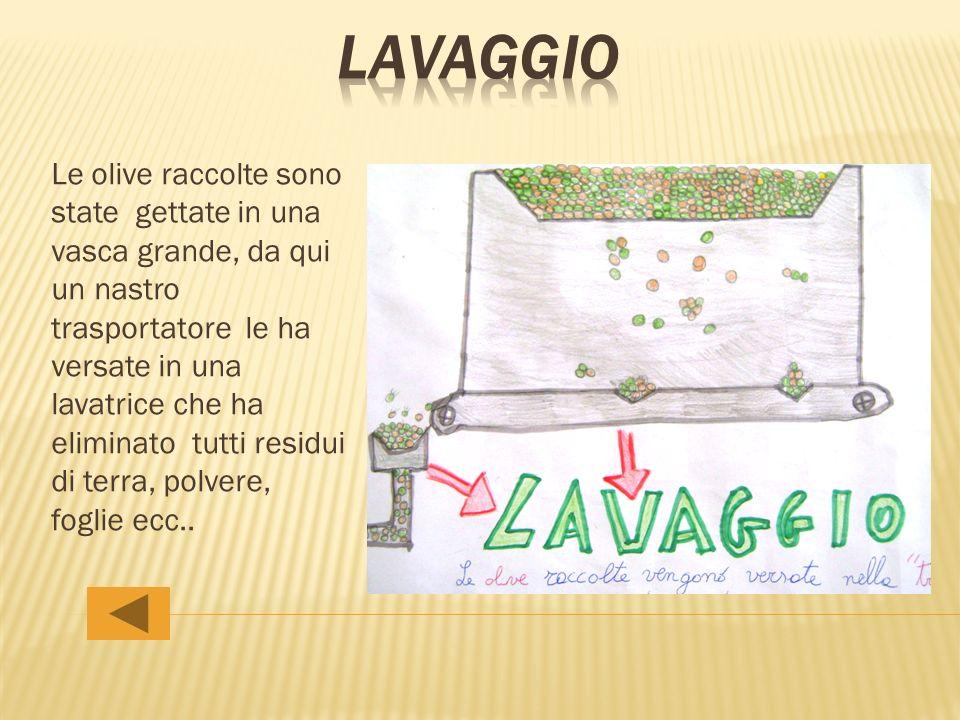 Le olive raccolte sono state gettate in una vasca grande, da qui un nastro trasportatore le ha versate in una lavatrice che ha eliminato tutti residui