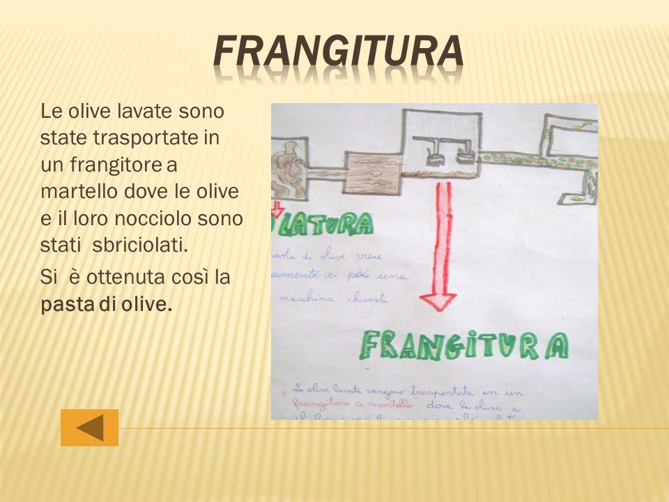 Le olive lavate sono state trasportate in un frangitore a martello dove le olive e il loro nocciolo sono stati sbriciolati. Si è ottenuta così la past