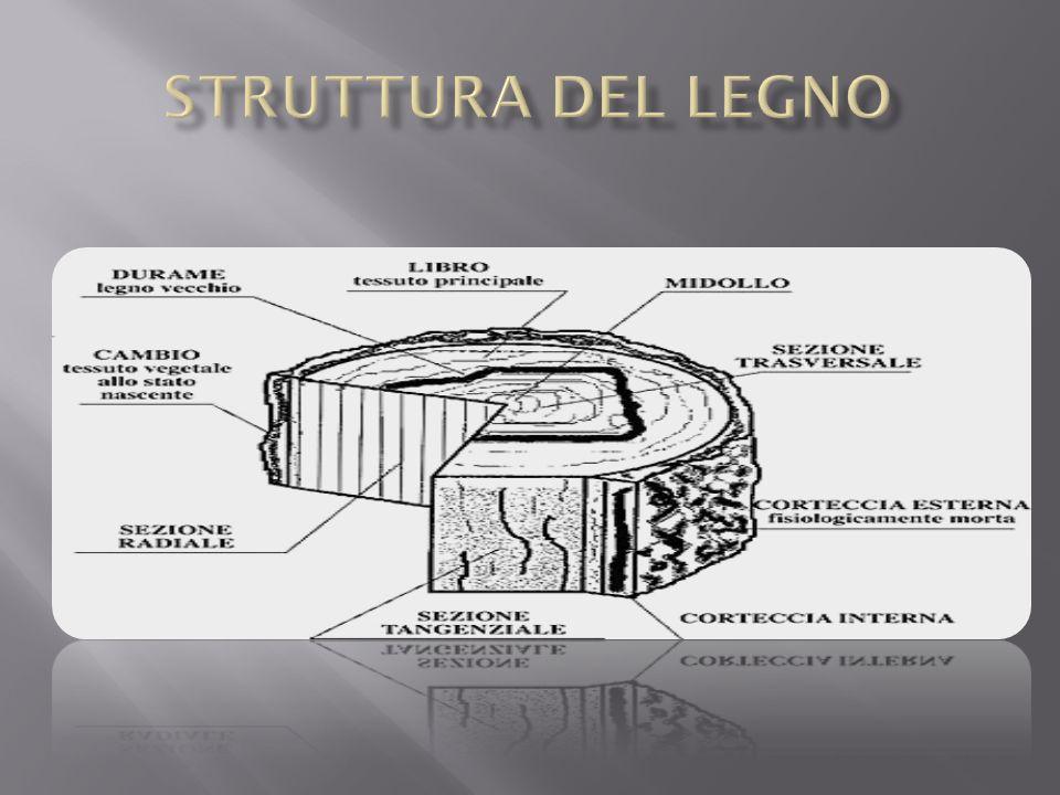 Pannelli di fibre sono ricavati da scarti industriali provenienti da varie lavorazioni e sottoposti a una sfibratura con lo scopo di rompere i legami che tengono unite le fibre.
