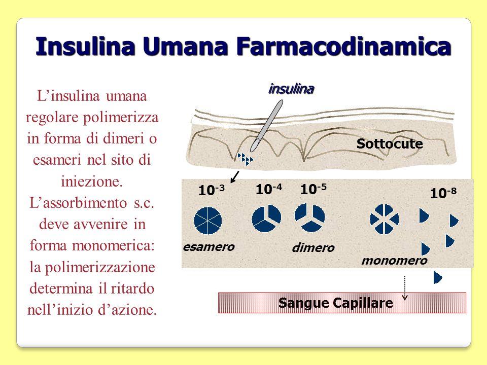 Insulina Umana Farmacodinamica insulina Sangue Capillare Sottocute 10 -3 10 -5 10 -4 esamero dimero monomero 10 -8 Linsulina umana regolare polimerizz