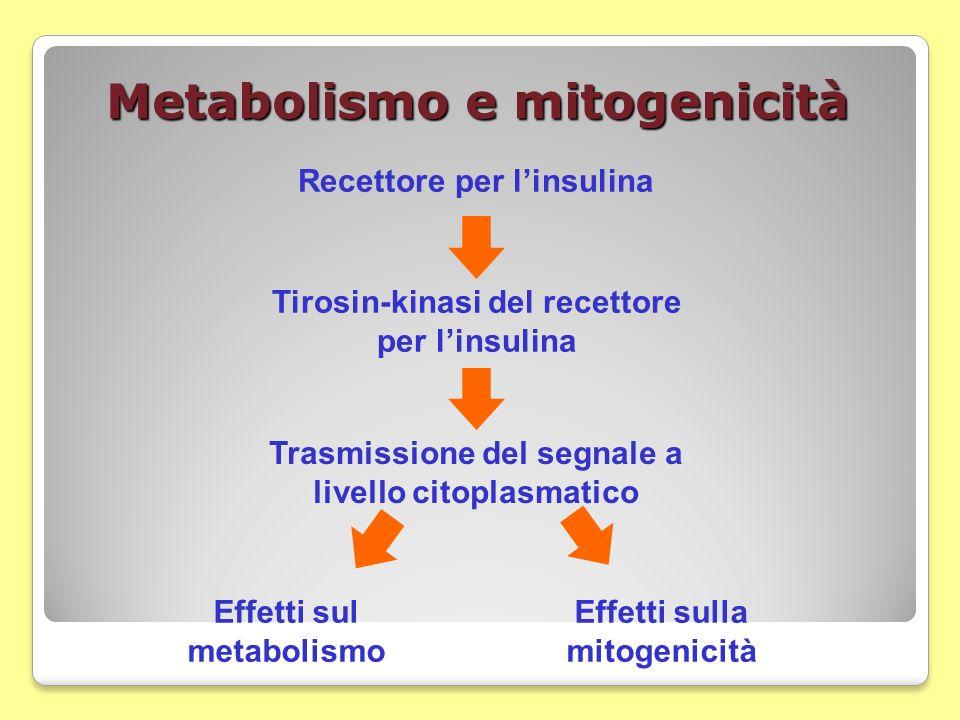 Metabolismo e mitogenicità Recettore per linsulina Tirosin-kinasi del recettore per linsulina Trasmissione del segnale a livello citoplasmatico Effett