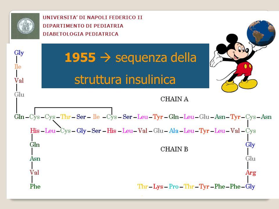 UNIVERSITA DI NAPOLI FEDERICO II DIPARTIMENTO DI PEDIATRIA DIABETOLOGIA PEDIATRICA 1955 sequenza della struttura insulinica