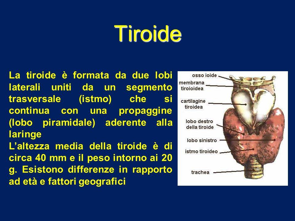 Tiroide La tiroide è formata da due lobi laterali uniti da un segmento trasversale (istmo) che si continua con una propaggine (lobo piramidale) aderen