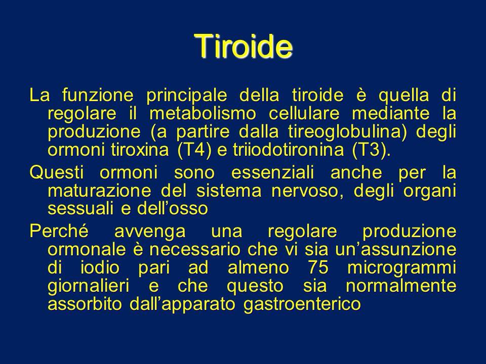 Tiroide La funzione principale della tiroide è quella di regolare il metabolismo cellulare mediante la produzione (a partire dalla tireoglobulina) deg