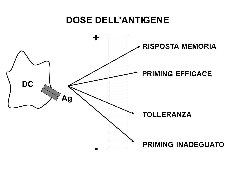 DOSE DELLANTIGENE + - RISPOSTA MEMORIA PRIMING EFFICACE TOLLERANZA PRIMING INADEGUATO Ag DC