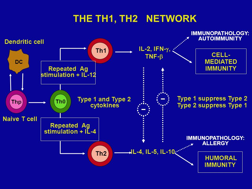 Thp Th0 Th1 IL-4, IL-5, IL-10 CELL- MEDIATED IMMUNITY HUMORAL IMMUNITY Type 1 and Type 2 cytokines Type 1 suppress Type 2 Type 2 suppress Type 1 IMMUN