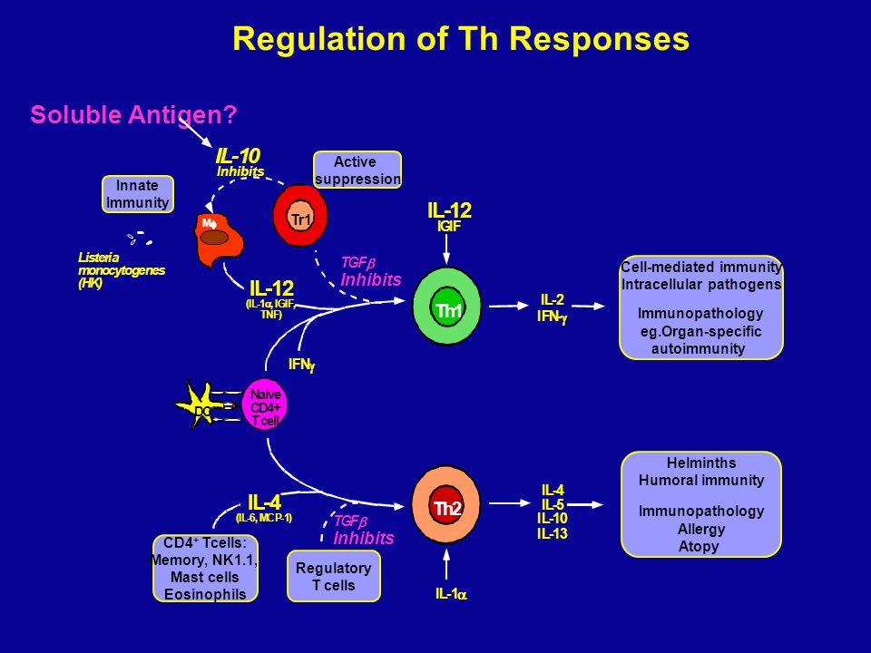 Naive CD4+ T cell Th1 Th2 IL-2 IFN- IL-4 IL-5 IL-10 IL-13 IL-10 Inhibits Listeria monocytogenes (HK) DC M IL-4 (IL-6, MCP-1) IL-12 (IL-1, IGIF, TNF) T