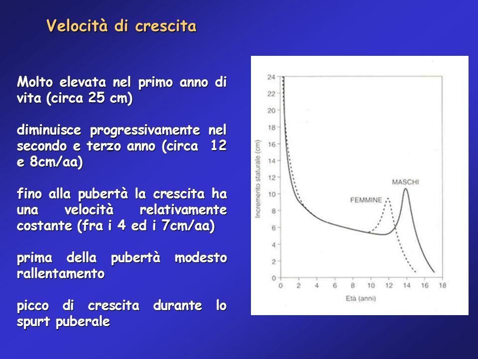 Velocità di crescita Molto elevata nel primo anno di vita (circa 25 cm) diminuisce progressivamente nel secondo e terzo anno (circa 12 e 8cm/aa) fino