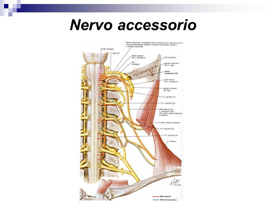 Nervo accessorio
