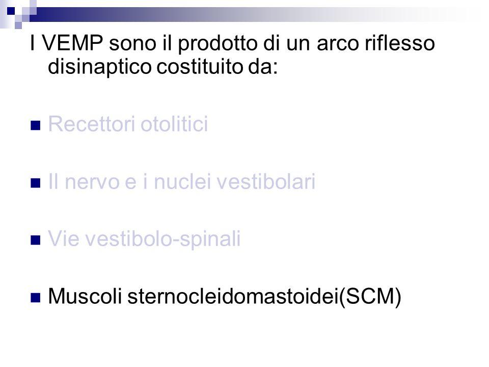 I VEMP sono il prodotto di un arco riflesso disinaptico costituito da: Recettori otolitici Il nervo e i nuclei vestibolari Vie vestibolo-spinali Musco