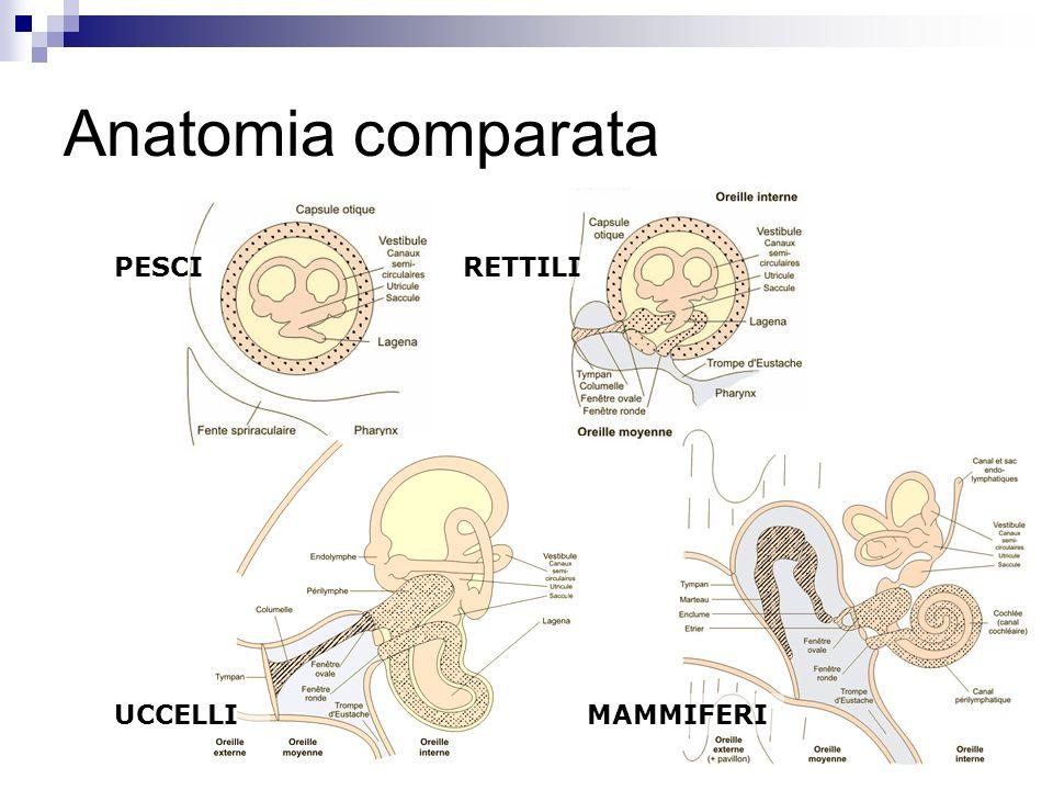 Anatomia comparata PESCIRETTILI UCCELLIMAMMIFERI