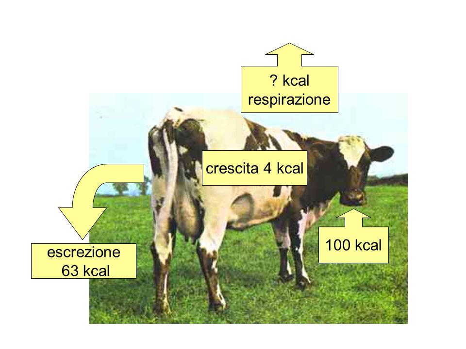 100 kcal crescita 4 kcal escrezione 63 kcal 100-63-4=33 kcal respirazione