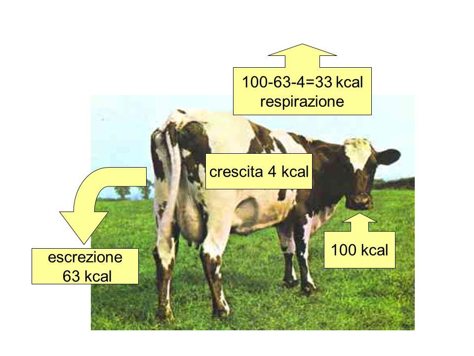 Rendimento di assimilazione: RA=A n /I n Rendimento di produzione: RP=P n /A n 100 kcal crescita 4 kcal escrezione 63 kcal 33 kcal respirazione