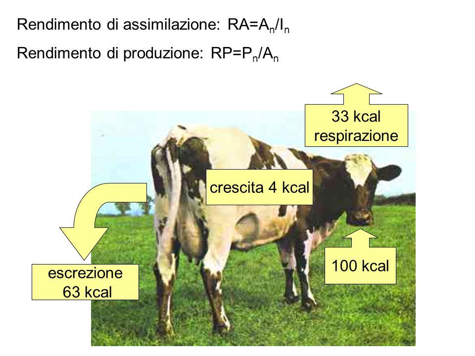 Rendimento di assimilazione: RA=A n /I n =(4+33)/100=0.37 Rendimento di produzione: RP=P n /A n =4/(4+33)=0.11 100 kcal crescita 4 kcal escrezione 63 kcal 33 kcal respirazione