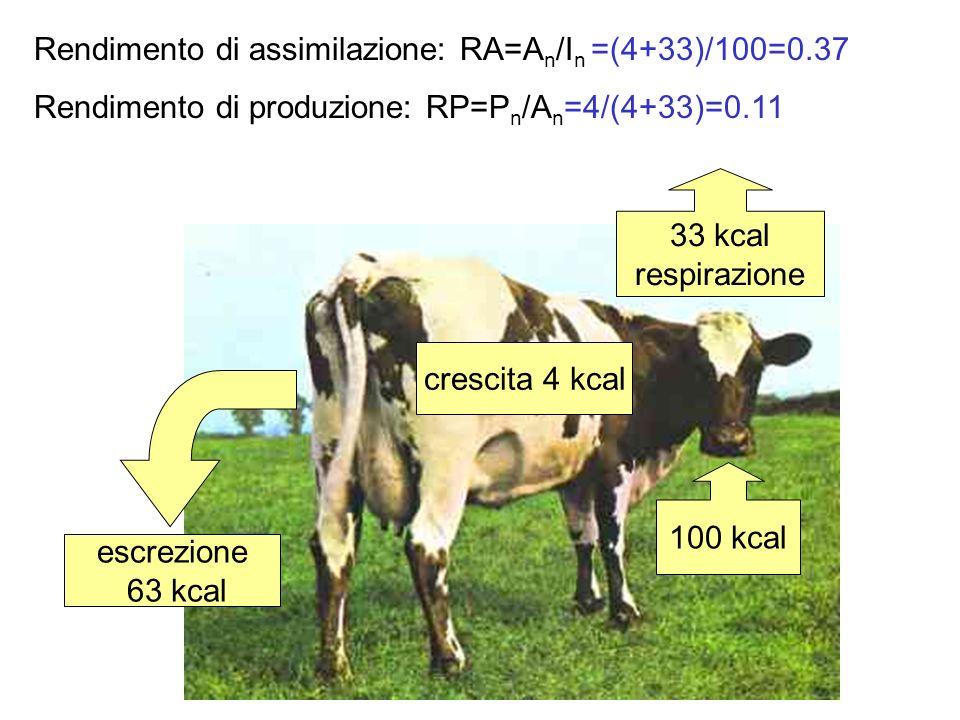Efficienza ecologica: NP n /NP n-1 In generale: NP n /NP n-1 0.1 (o 10%) (rapporto di Lindeman)