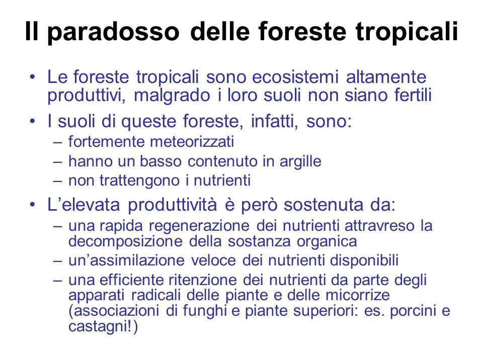 Il paradosso delle foreste tropicali Le foreste tropicali sono ecosistemi altamente produttivi, malgrado i loro suoli non siano fertili I suoli di queste foreste, infatti, sono: –fortemente meteorizzati –hanno un basso contenuto in argille –non trattengono i nutrienti Lelevata produttività è però sostenuta da: –una rapida regenerazione dei nutrienti attravreso la decomposizione della sostanza organica –unassimilazione veloce dei nutrienti disponibili –una efficiente ritenzione dei nutrienti da parte degli apparati radicali delle piante e delle micorrize (associazioni di funghi e piante superiori: es.