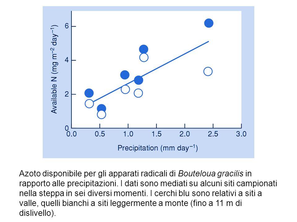 Azoto disponibile per gli apparati radicali di Bouteloua gracilis in rapporto alle precipitazioni.