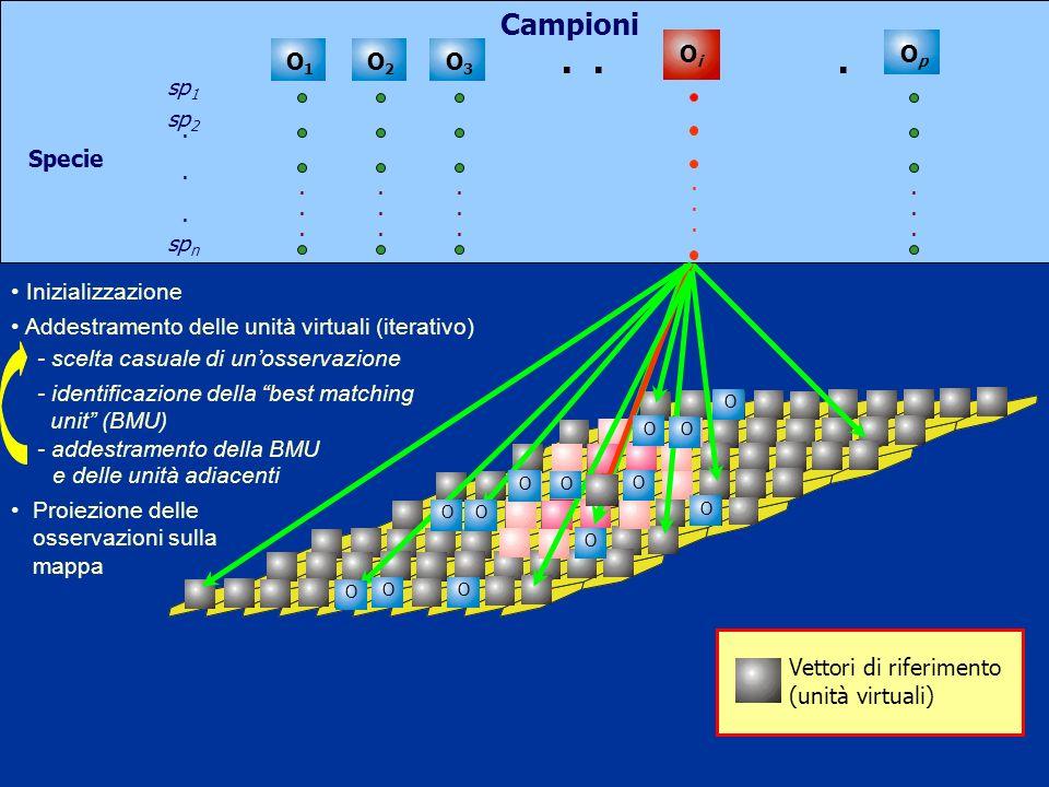 Campioni O p O 1 O 2 O 3........................... O i...... Inizializzazione O O O O O O O O O O Addestramento delle unità virtuali (iterativo) Proi