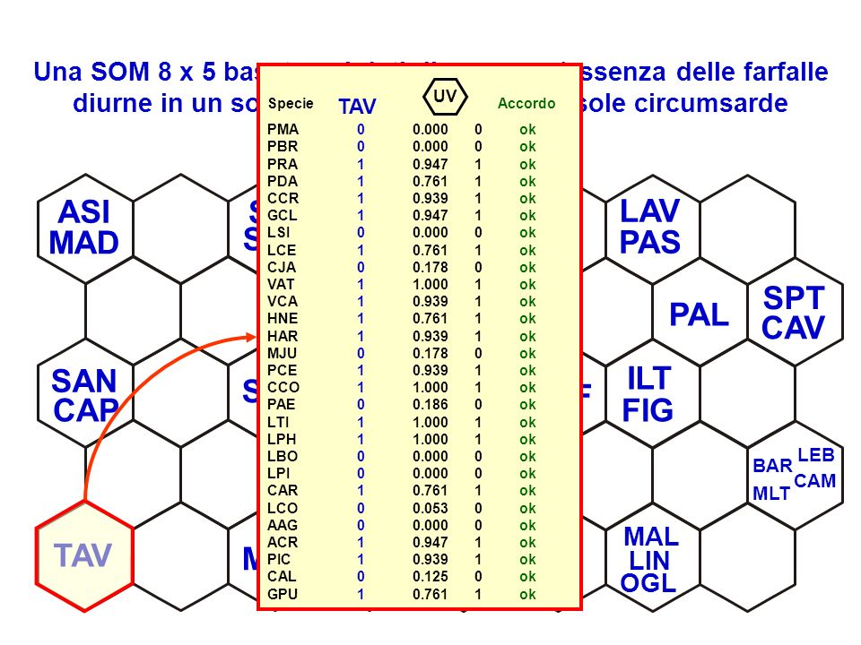 Una SOM 8 x 5 basata sui dati di presenza/assenza delle farfalle diurne in un sottoinsieme delle piccole isole circumsarde LAP SMA LAV RAZ BUD SAN SPA SOF SPI PAL FIG CAM PAS CAV LEB TAV ASI ILT MOL MOR SST CAP MLT OGL SER BAR LIN MAD SPT MAL Specie Accordo PMA0 0.000 0ok PBR0 0.000 0ok PRA1 0.947 1ok PDA1 0.761 1ok CCR1 0.939 1ok GCL1 0.947 1ok LSI0 0.000 0ok LCE1 0.761 1ok CJA0 0.178 0ok VAT1 1.000 1ok VCA1 0.939 1ok HNE1 0.761 1ok HAR1 0.939 1ok MJU0 0.178 0ok PCE1 0.939 1ok CCO1 1.000 1ok PAE0 0.186 0ok LTI1 1.000 1ok LPH1 1.000 1ok LBO0 0.000 0ok LPI0 0.000 0ok CAR1 0.761 1ok LCO0 0.053 0ok AAG0 0.000 0ok ACR1 0.947 1ok PIC1 0.939 1ok CAL0 0.125 0ok GPU1 0.761 1ok TAV UV