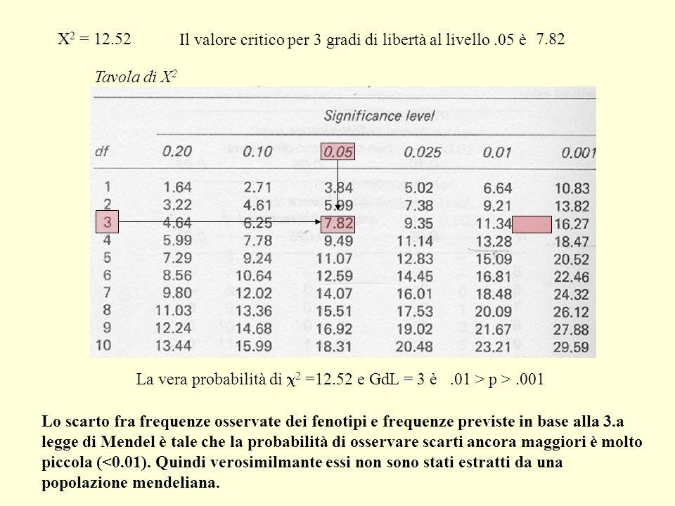 X 2 = 12.52 Il valore critico per 3 gradi di libertàal livello.05 è 7.82 Tavola di X 2 Lo scarto fra frequenze osservate dei fenotipi e frequenze prev