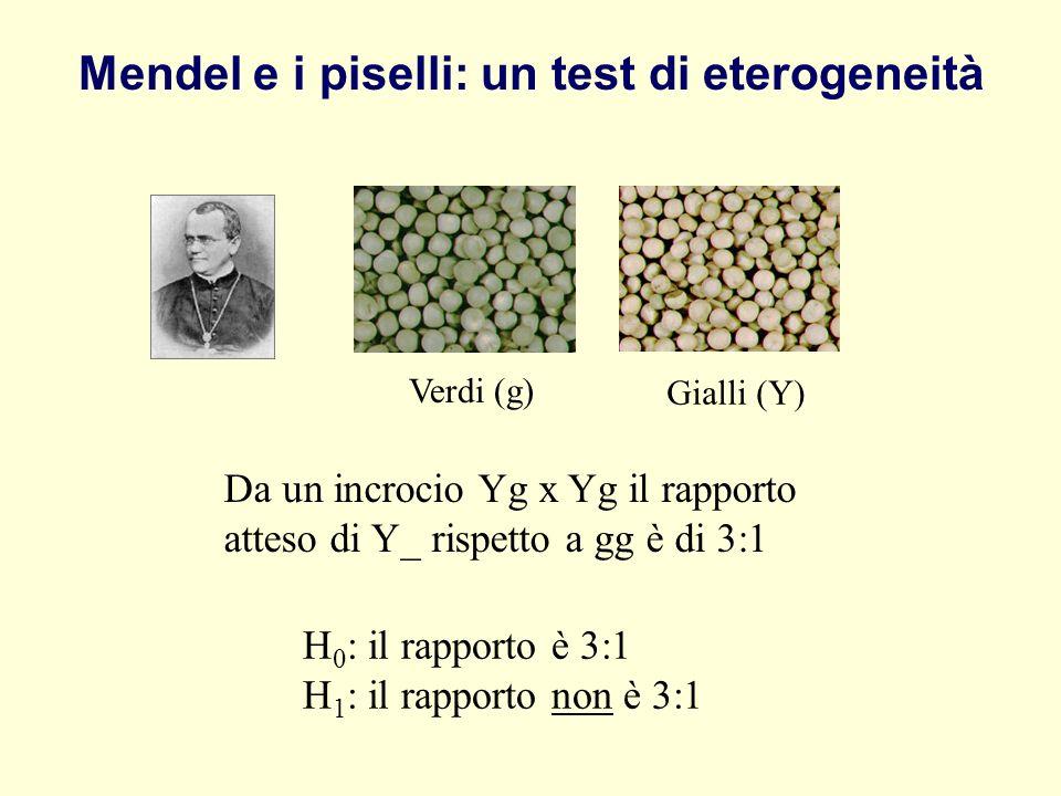 Mendel e i piselli: un test di eterogeneità Verdi (g) Gialli (Y) Da un incrocio Yg x Yg il rapporto atteso di Y_ rispetto a gg è di 3:1 H 0 : il rappo