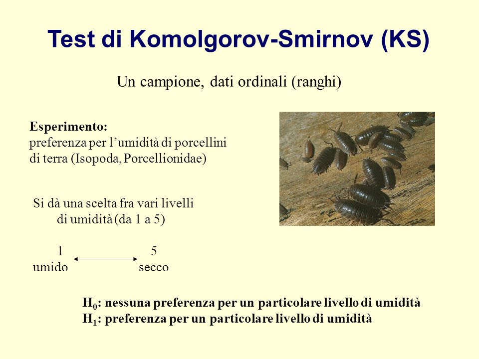 Test di Komolgorov-Smirnov (KS) Un campione, dati ordinali (ranghi) Esperimento: preferenza per lumidità di porcellini di terra (Isopoda, Porcellionid