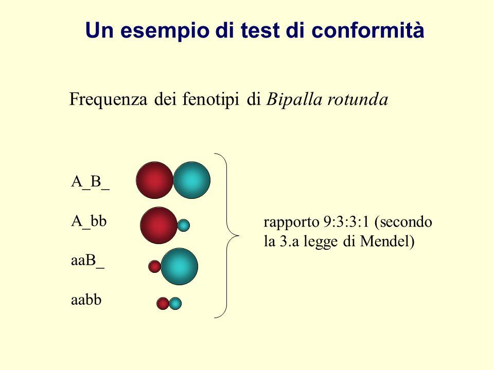 Frequenza dei fenotipi di Bipalla rotunda A_B_ A_bb aaB_ aabb rapporto 9:3:3:1 (secondo la 3.a legge di Mendel) Un esempio di test di conformità