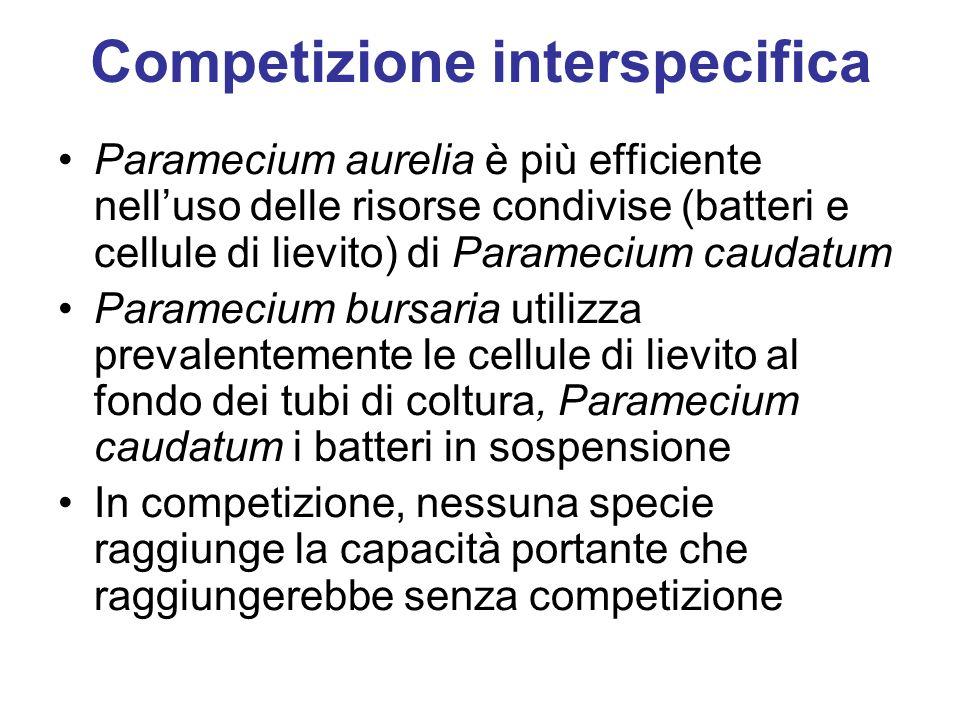 Paramecium aurelia è più efficiente nelluso delle risorse condivise (batteri e cellule di lievito) di Paramecium caudatum Paramecium bursaria utilizza prevalentemente le cellule di lievito al fondo dei tubi di coltura, Paramecium caudatum i batteri in sospensione In competizione, nessuna specie raggiunge la capacità portante che raggiungerebbe senza competizione Competizione interspecifica