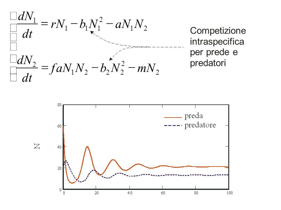 2 2 2221 2 21 2 111 1 mNNbNaNf dt dN NaNNbNr dt dN Competizione intraspecifica per prede e predatori