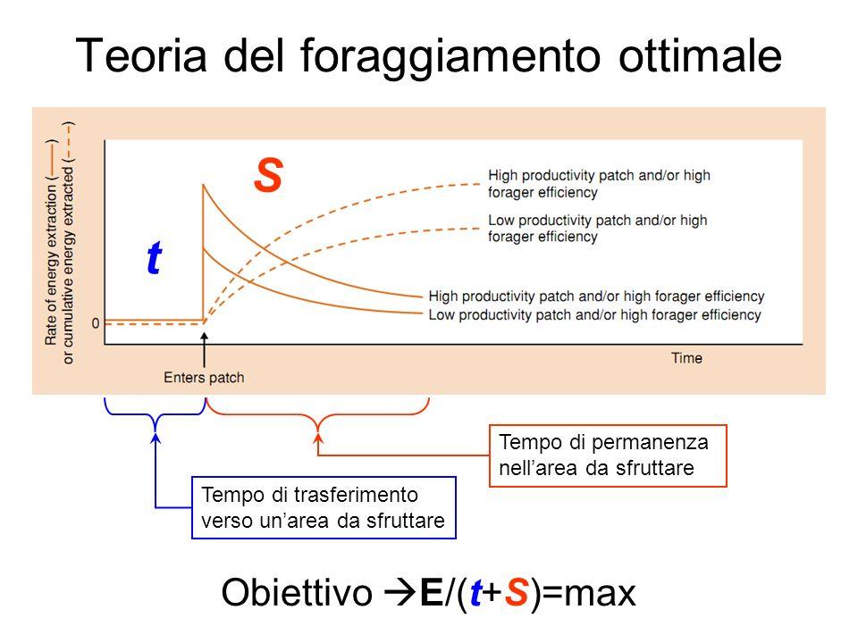 Teoria del foraggiamento ottimale Tempo di trasferimento verso unarea da sfruttare Tempo di permanenza nellarea da sfruttare t S Obiettivo E/(t+S)=max