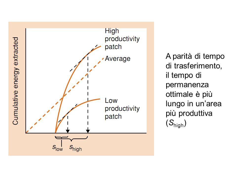 A parità di tempo di trasferimento, il tempo di permanenza ottimale è più lungo in unarea più produttiva (S high )