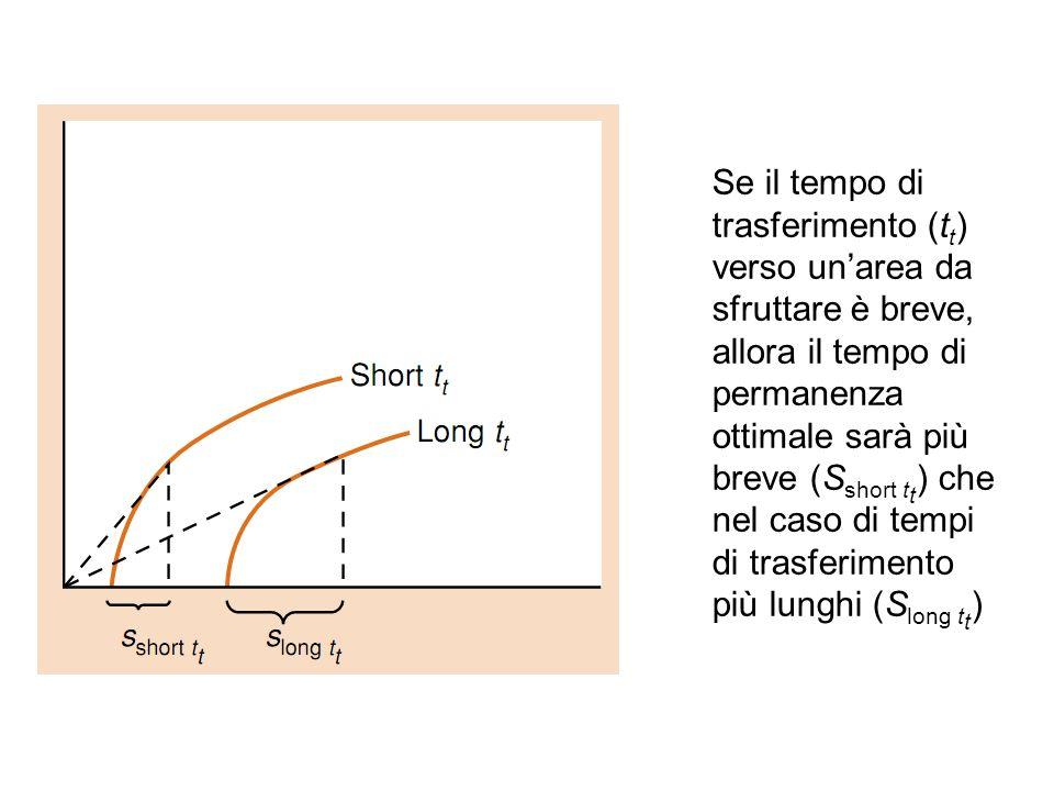 Se il tempo di trasferimento (t t ) verso unarea da sfruttare è breve, allora il tempo di permanenza ottimale sarà più breve (S short t t ) che nel ca