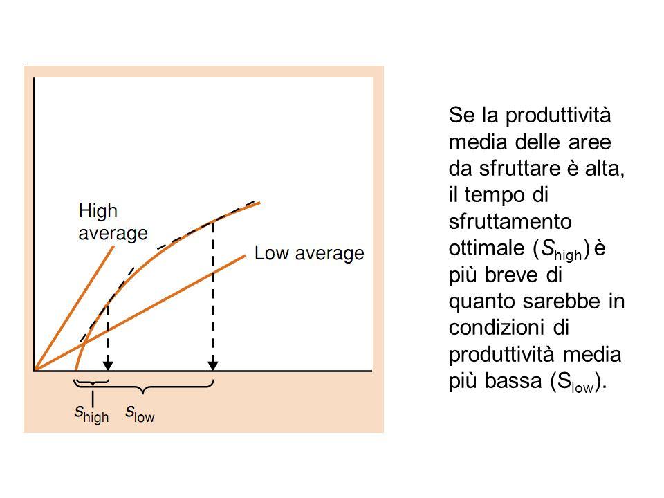 Se la produttività media delle aree da sfruttare è alta, il tempo di sfruttamento ottimale (S high ) è più breve di quanto sarebbe in condizioni di pr