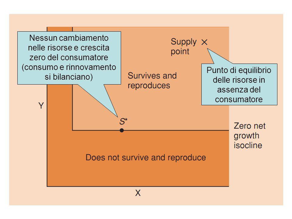 Nessun cambiamento nelle risorse e crescita zero del consumatore (consumo e rinnovamento si bilanciano) Punto di equilibrio delle risorse in assenza d