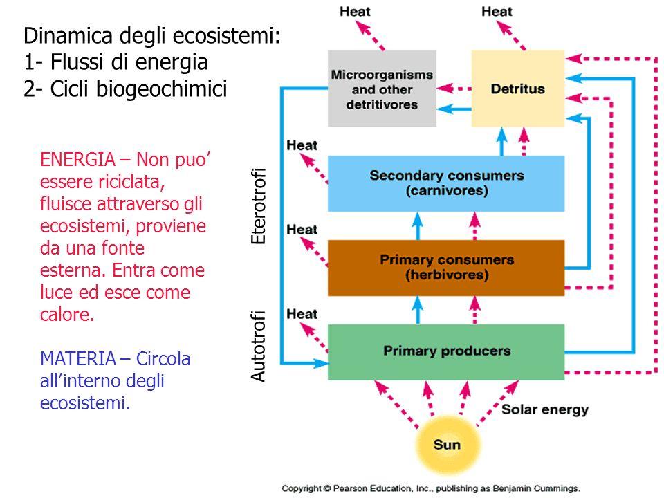 Dinamica degli ecosistemi: 1- Flussi di energia 2- Cicli biogeochimici ENERGIA – Non puo essere riciclata, fluisce attraverso gli ecosistemi, proviene