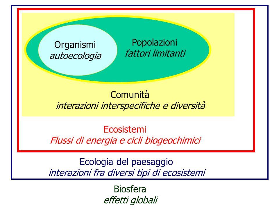 Organismi autoecologia Popolazioni fattori limitanti Comunità interazioni interspecifiche e diversità Ecosistemi Flussi di energia e cicli biogeochimi